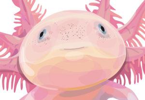 ceart-sala-b-ruth-gomez-axolotl