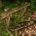 """COLECTIVO FOTOGRAFICO DE FUENLABRADA """"El sentimiento en la fotografía"""" SALA COLECTIVOS: Del 28 de septiembre al 17 de octubre de 2017. Inauguración:28 de septiembrea las 20:00 horas """"En cada fotografía […]"""