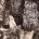"""ZORROMONO / CARLOS RAMÍREZ DE LA CONCEPCIÓN """"CAMPO DE BATALLA EN EL INFIERNO"""" Del 28 de noviembre al 17 diciembre 2019. SALA C 28 de noviembre de 2019 a las […]"""